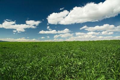 The Grassland